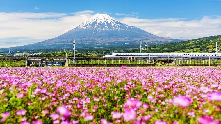 富士山と花畑と新幹線