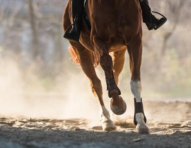 乗馬で馬を走らせる